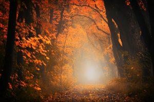light-3130988